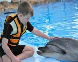 Дельфинарии аквариумы и аквапарки